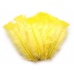 Pene decorative de curcă, lungime 11-17 cm (pachet 20 buc.) - galben