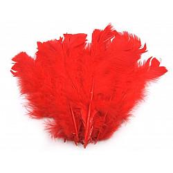 Pene decorative de curcă, lungime 11-17 cm (pachet 20 buc.) - roșu scarlet