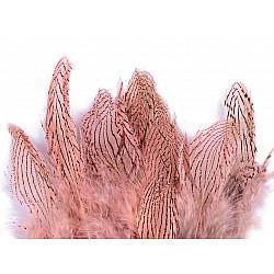 Pene decorative de fazan, lungime 5 - 11 cm (pachet 20 buc.) - roz pudrat